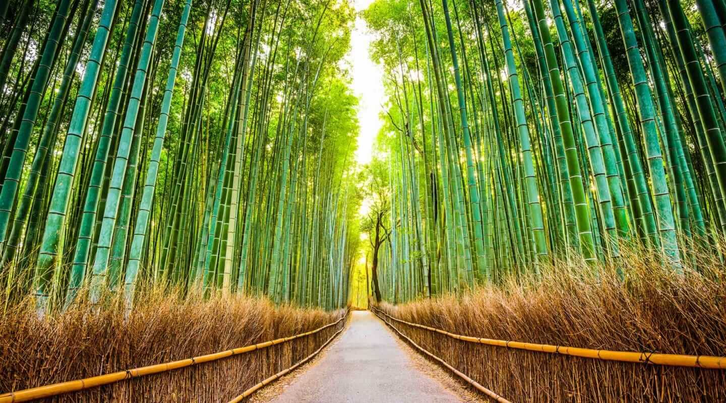 Arashiyama Bamboo Forest Kyoto Boutique Japan